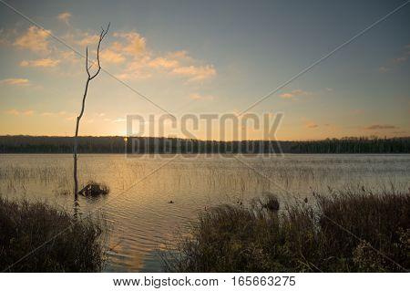 Peaceful image of silhouettes of a dead tree trunk cattails and grasses at dawn with a yellow sunrise. A breeze gives the lake a few little waves.