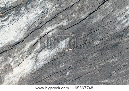 old wood background vintage style at beauty