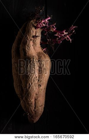 Brown Sweet Potato with Purple Sprouts on Black Wood