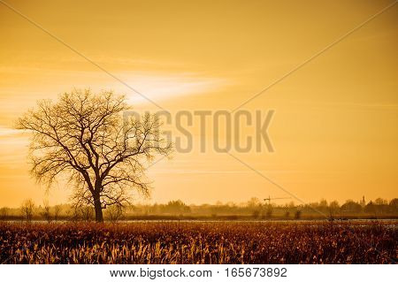 Dramatic colorful evening scene with Silhouette of leafless tree in sunlight. Retro style, instagram filter. Creative image. Beauty in the world. Poland is beautifull.