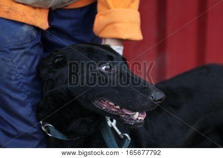 Animal shelter - black dog - sad dog