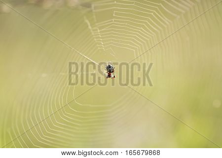 a small spider spun a web on summer green meadow