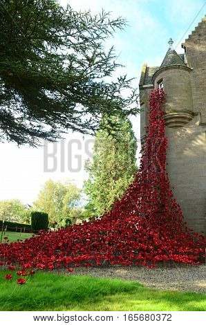 A view of a display of poppies in Perth