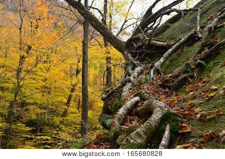 tree roots on a boulder Off the beaten path on the mountain to Smugglers Notch in Vermont