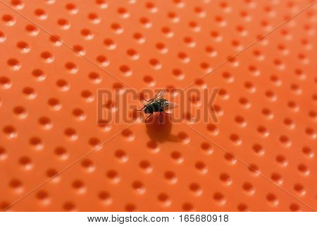 Closeup of a small fly on orange background