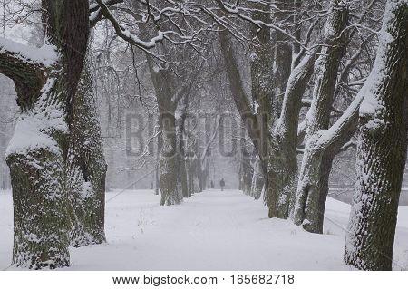 Walk in the snowstorm January day in Catherine Park in Tsarskoye Selo