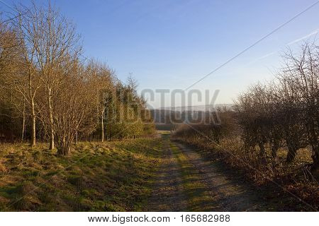 a rural bridleway going through a winter miixed woodland with a hawthorn hedgerow and hills in the distance under a clear blue sky in the yorkshire wolds