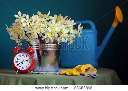 A bouquet of daffodils an alarm clock and garden tools on the table. Spring still life.