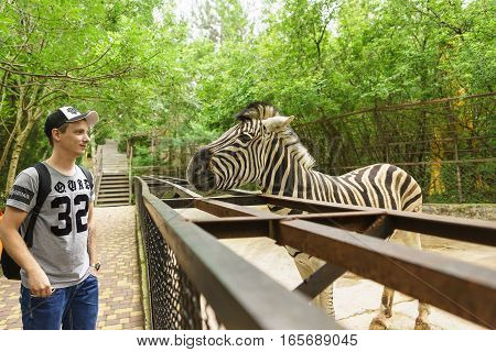 YALTA CRIMEA RUSSIA - JUNE 09.2016: A young man stands next to the Zebra (lat. Hippotigris) pen at the zoo.