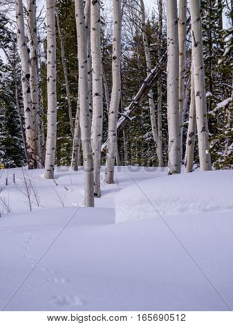 Snowy scene in forest with copy space