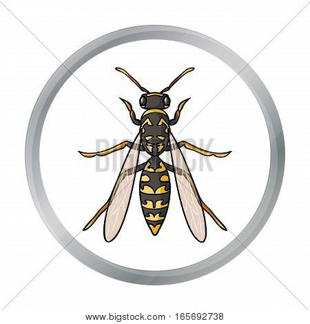 Wasp icon in cartoon design isolated on white background. Insects symbol stock vector illustration.