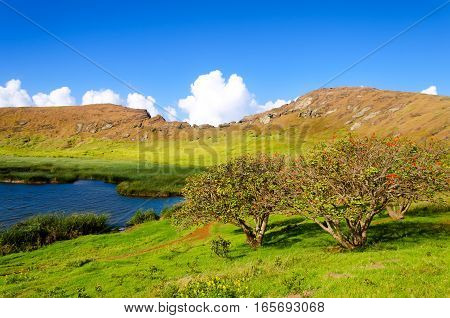Lake and flowering trees in a crater in Easter Island Chile
