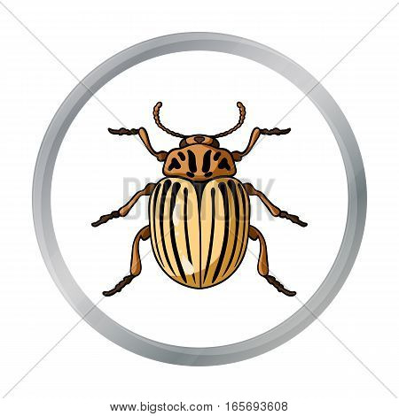 Colorado beetle icon in cartoon design isolated on white background. Insects symbol stock vector illustration.