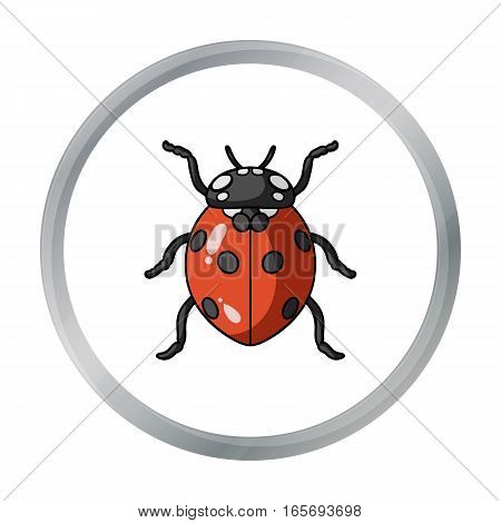 Ladybug icon in cartoon design isolated on white background. Insects symbol stock vector illustration.