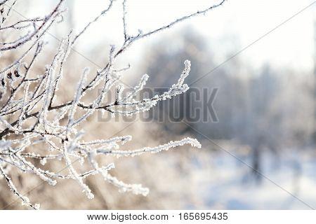 Branch Tree In Snow