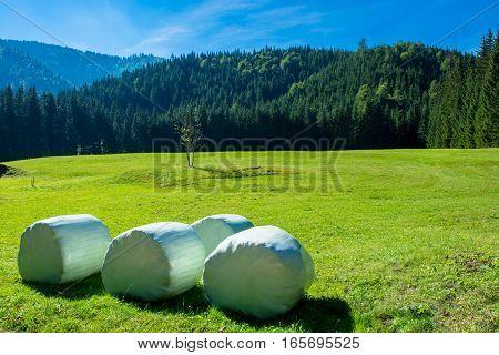 Hay Bails on Mowed Meadow in Alpine Landscape