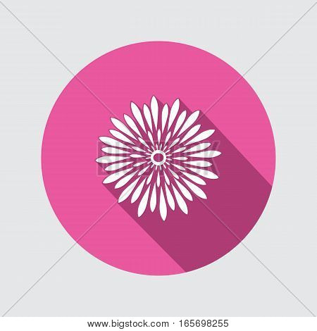 Spring flower. Camomile, dog-daisy icons. Floral symbol. Round circle flat icon with long shadow. Vector