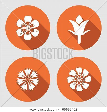 Flower icons set. Chamomile, daisy, blue poppy cloves. Spring flowers. Floral symbols with leaves. Color signs. May be used in cuisine. Vector isolated.