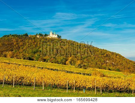 Castle with Church on Hill with Vineyard in Autumn