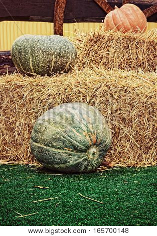 Pumpkins and hay stacks. Thanksgiving Display.Toned image.