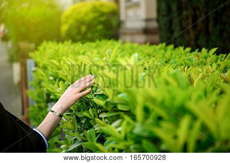 Zen woman walking on a street gently touching the green bushes leaves with sun flare and sun rays on summer day full of serenity