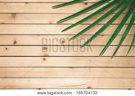 Green palm leaf lying on the wooden surface top view
