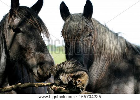 Cute tabby cat play with old horses on the corral fence