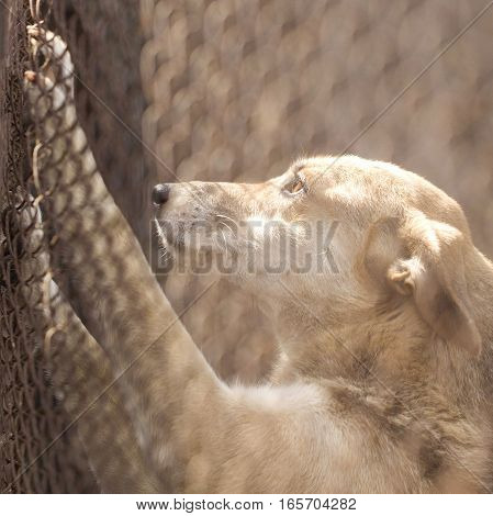 Abandoned dog in the kennel, homeless dog behind bars in an animal shelter.Sad looking dog behind the fence looking out through the wire of his cage