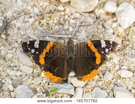 beautiful orange butterfly resting on the floor