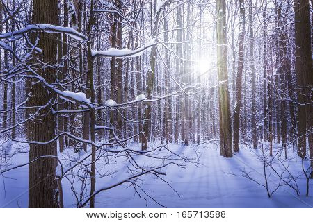 Branches of trees covered with frost and snow. Winter background