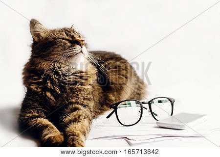 Cute Cat Sitting Sleeping On Table With Glasses Phone And Paper, Working Home Concept, Space For Tex