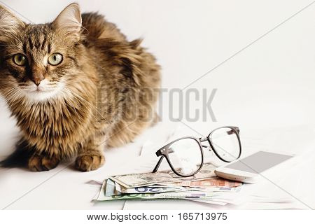 cute cat sitting on table with glasses phone and money working home or shopping online concept space for text