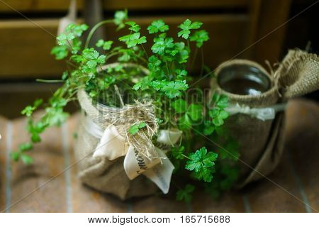 green parsley herb in a beautiful jar. clouse up