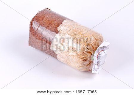 Mushroom cultivation : Infected mushroom bag of bamboo mushroom Veiled lady mushroom isolated on white background.