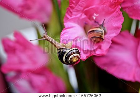Snail with a pink flower on the background.