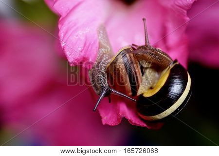 Two snails with a pink flower on the background.