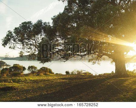 Sunset under Hippie tree in San Francisco.