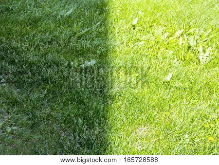 Light and shadow. Background of lush green grass