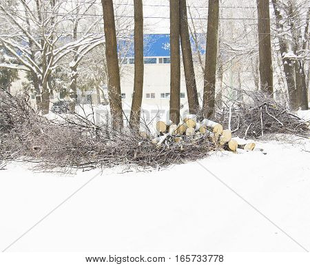 firewood in the forest forest in winter snow