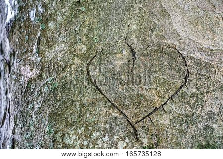 Heart carved in the bark of a tree