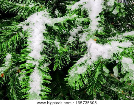 Bright white snow on green fir and spruce during winter