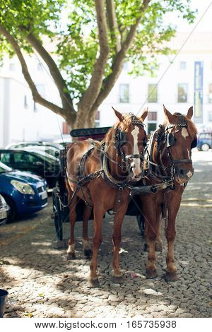 A pair of horses in harness on city street