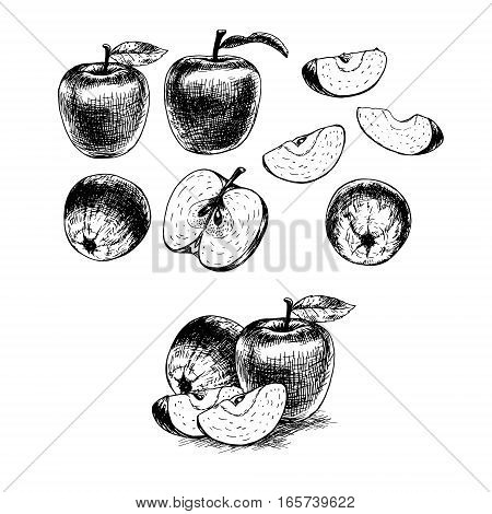 Hand drawn set of apples. Retro sketches isolated. Vintage collection. Linear graphic design. Black and white image of fruit. Vector illustration.