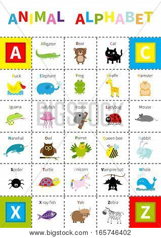 Animal zoo alphabet poster. Cute cartoon character set. Isolated White background Baby children education Alligator bear cat duck elephant frog giraffe hamster iguana Flat design Vector illustration