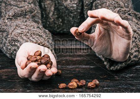 Human hands holding hazelnuts. Closeup front view