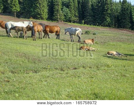 Herd of horses in the pasture. Rural life. Nature and animals