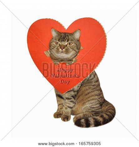 The lovely cat sits. His head went through a big red paper heart. White background.