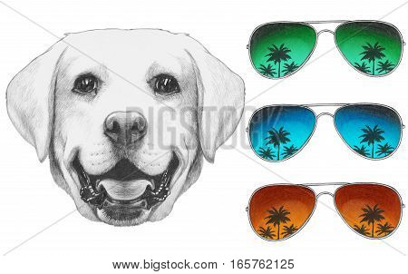 Portrait of Labrador with mirror sunglasses. Hand drawn illustration.