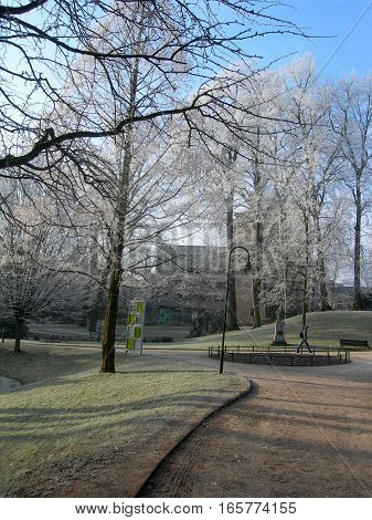 Hoar-frost on trees in the winter in park of Leuven, Belgium2