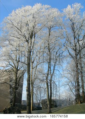 Hoar-frost on trees in the winter in park of Leuven, Belgium3
